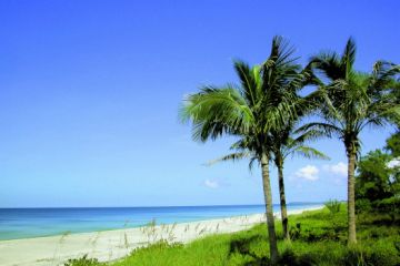 Fort Myers BEACH PALMS