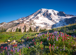 Tourweb-Fernweh-Angebote/USA/WashingtonState/MtRainier